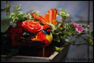 Bird in the roses