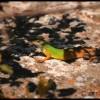 Take a warming break – Lizard in the sun