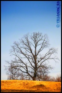 Rien ne pousse à l'ombre des grands arbres - La umbra marilor copaci nu creste nimic - Constantin Brancusi