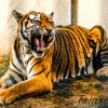 Live as a Tiger